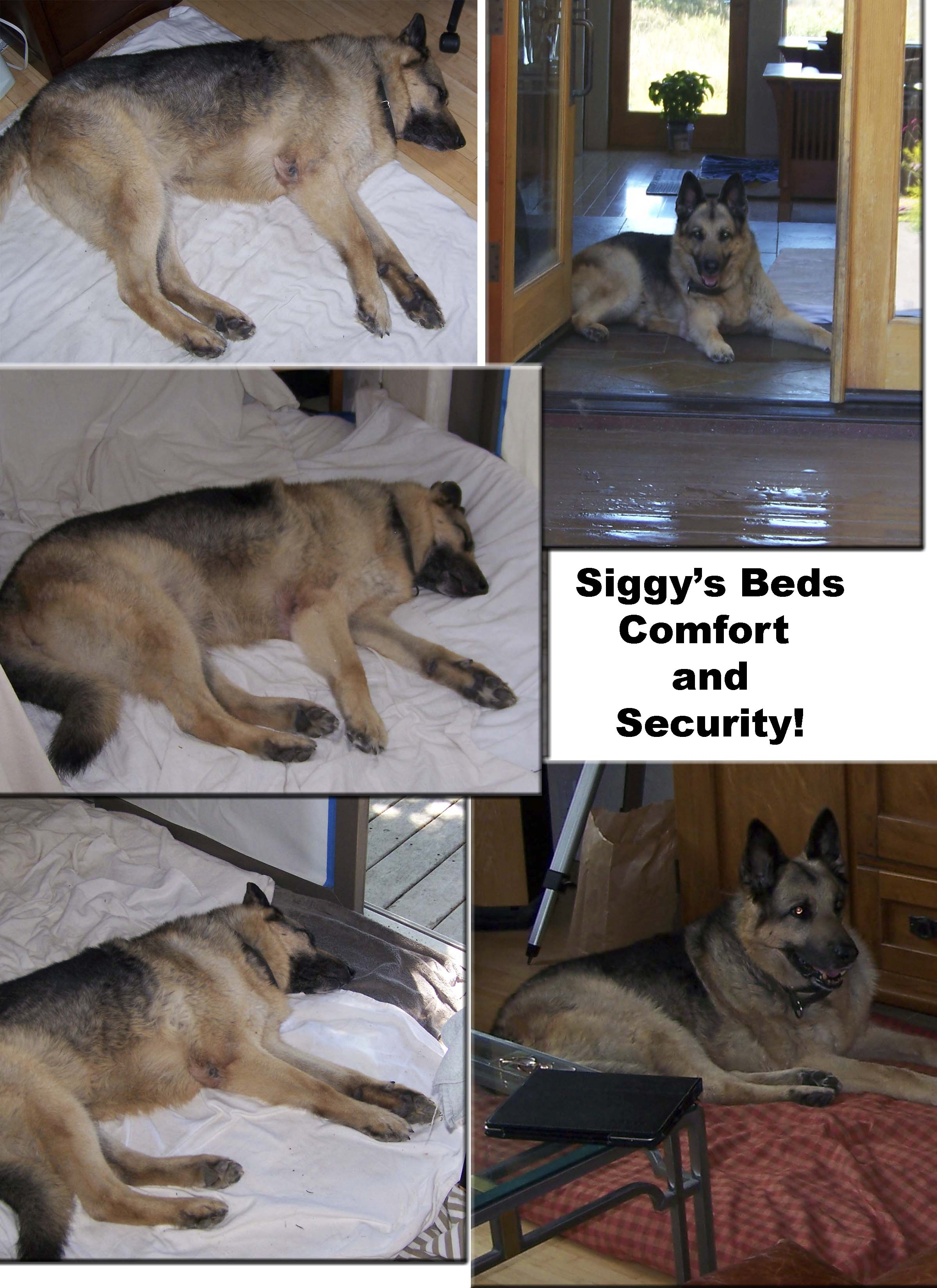 Siggy's Beds