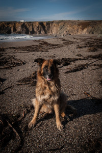 Shaggy at the beach