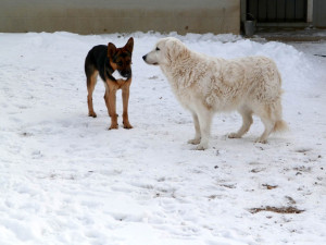 Tatum to Willow--This is snow