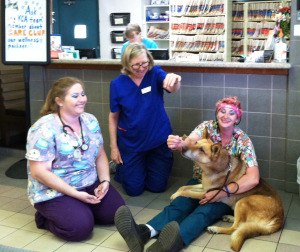 Amelia with Vet Hospital Angels