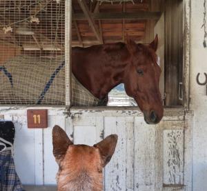 HorseFriend